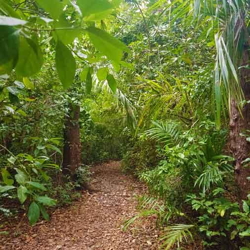 Pssing in Masingini Forest at Spice tour Zanzibar on bike